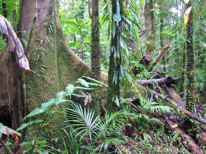 Флора экваториальных лесов