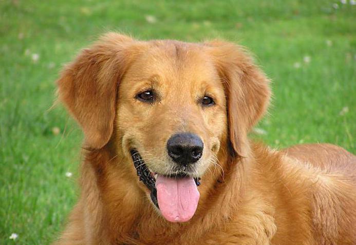 Chelapite for dogs instruction