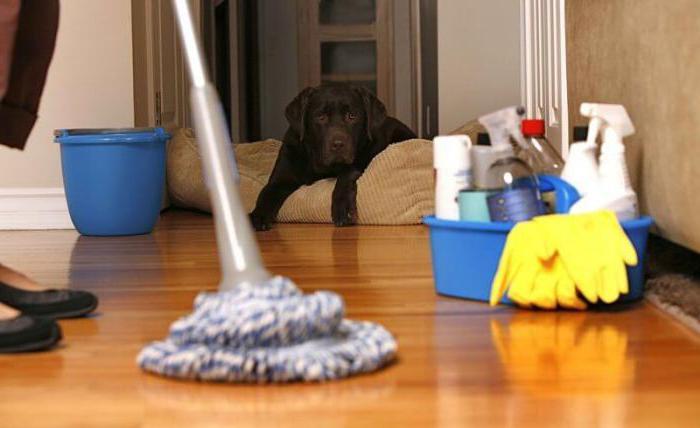 qlean ru cleaning company reviews