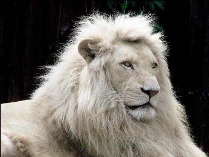 LION'pride
