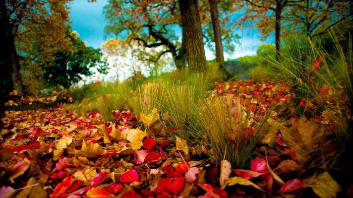Экибана из осенних листьев своими руками