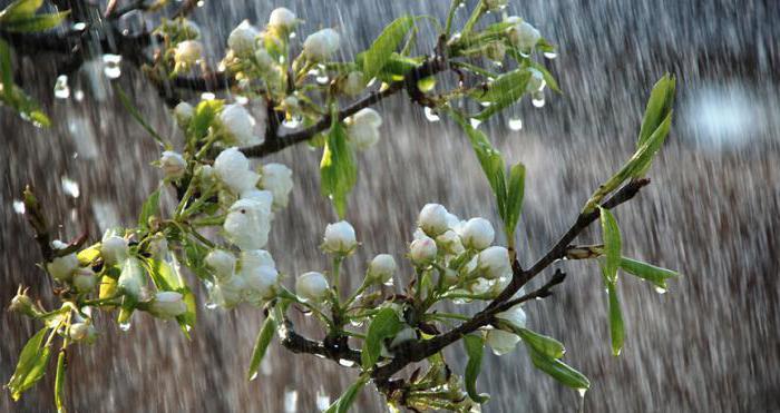 analysis of the poem spring storm tyutcheva