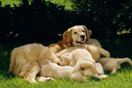 дана ультра для собак отзывы