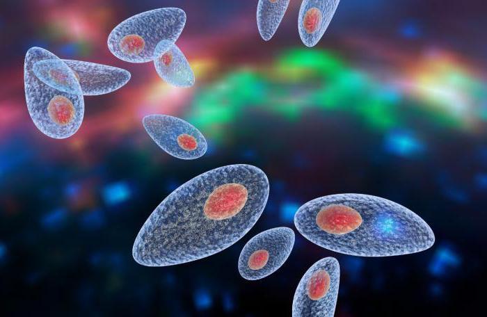 Токсоплазмоз — Анализ на токсоплазмоз и расшифровка результатов