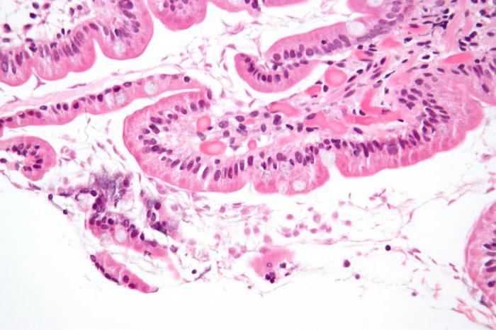 Тиберал в гинекологии отзывы