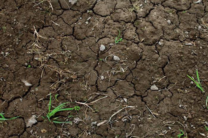 Krasnodar Krai soil description