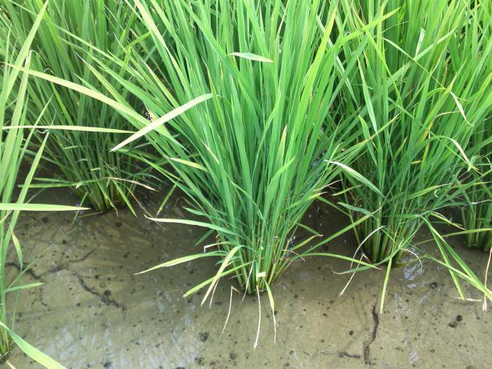 meadow and marsh soils of Krasnodar region