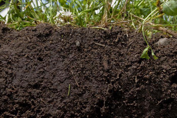 soil protection in Krasnodar region