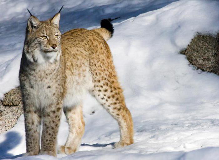 животные владимирской области занесенные в красную книгу