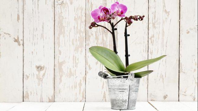 От чего завелись мошки в комнатном цветке