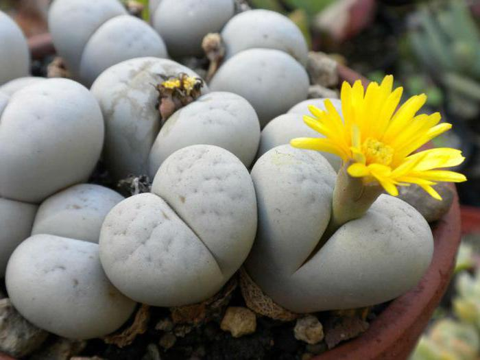 the most unusual flowers of the world photo