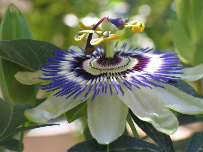 the most unusual flowers of the world photo with the names