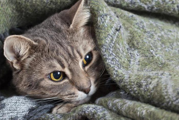 сколько смекты давать коту при поносе