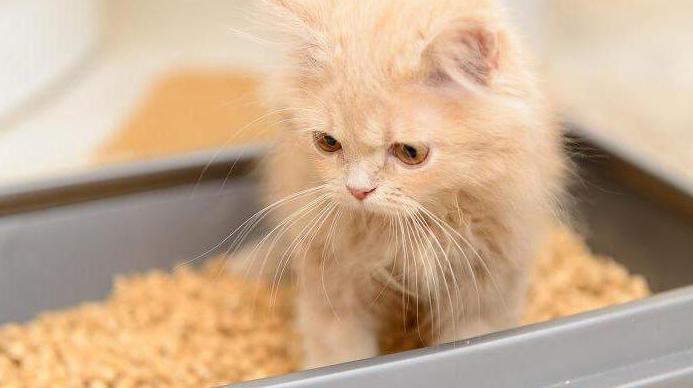 какие таблетки дать коту от поноса