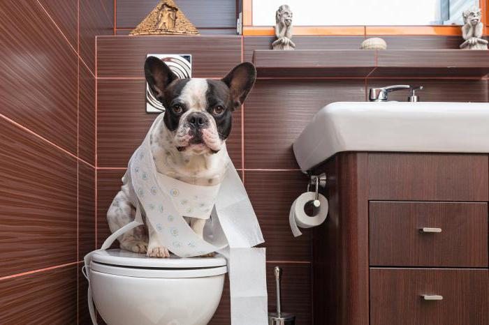 запор у собаки что делать