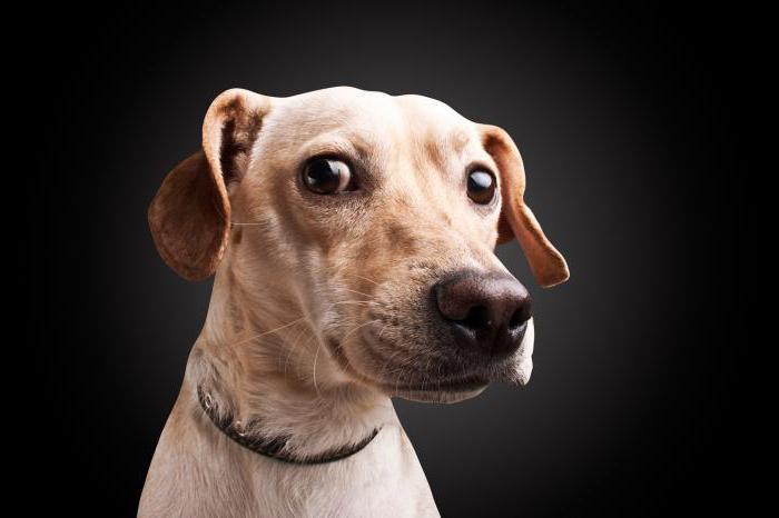 у собаки запор от костей что делать
