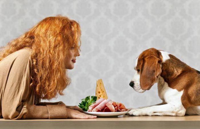 у собаки запор что делать в домашних