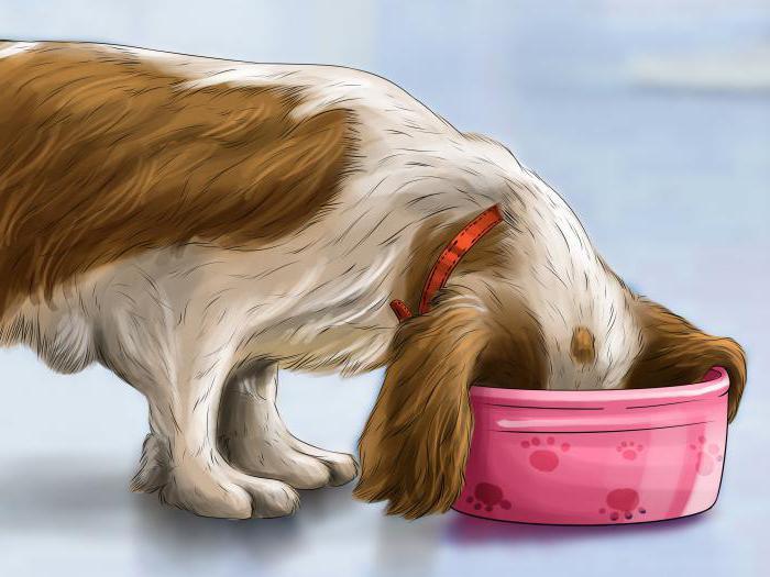 запор у собаки после костей что делать