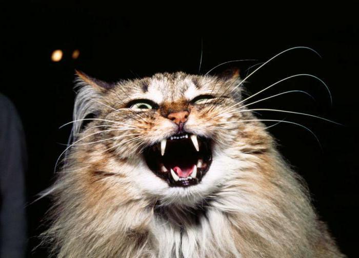 the cat yells at night