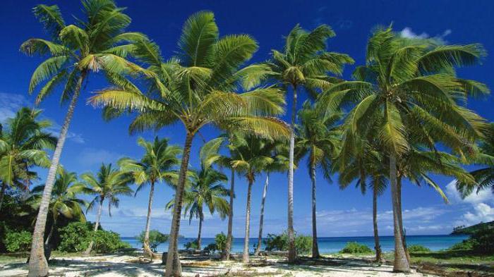 что растет на пальме