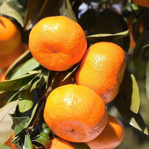 мандарины витамин с мг