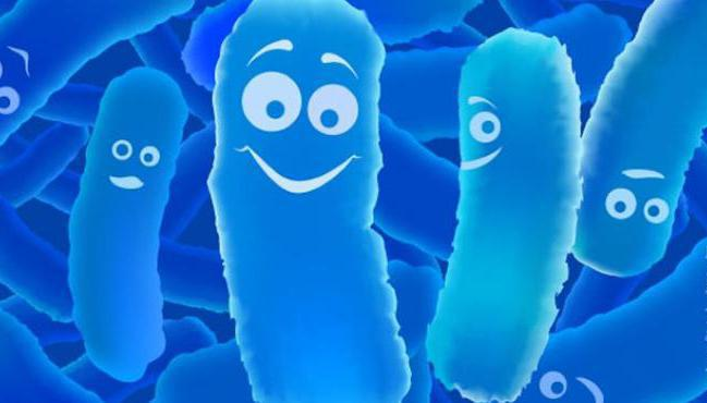 Что нужно пить с антибиотиками для микрофлоры