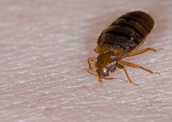 уничтожить паразитов в организме в домашних условиях