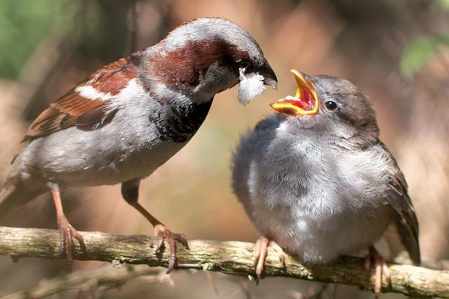 story sparrow turgenev analysis
