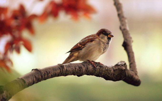 analysis of sparrow turgenev