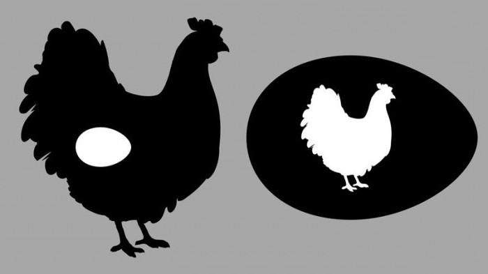 chicken bears eggs