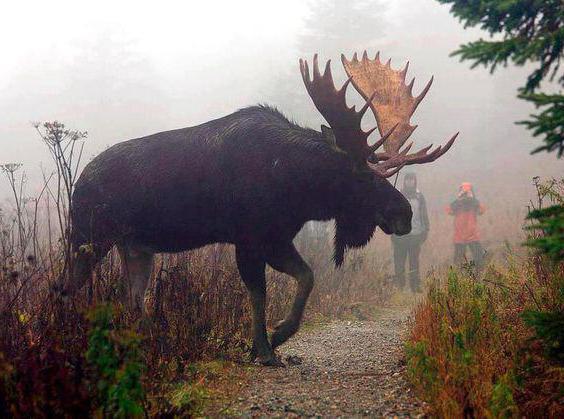 where elk lives in winter