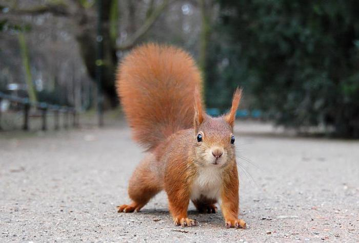 where do squirrels live in winter