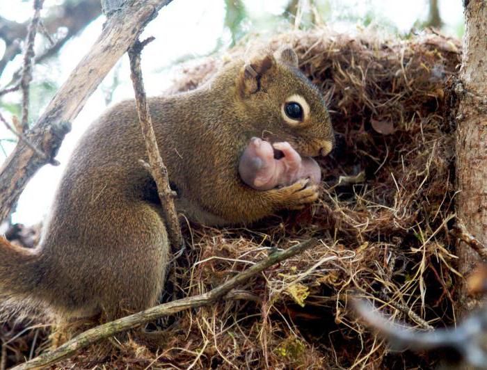 where do squirrels live in the forest