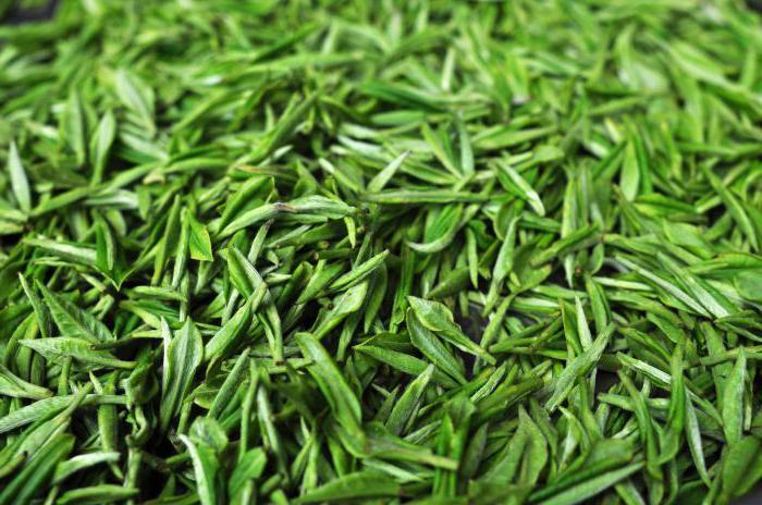какой чай полезнее зеленый или черный
