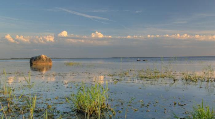 чудское озеро рыбалка