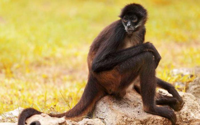 where many many wild monkeys live