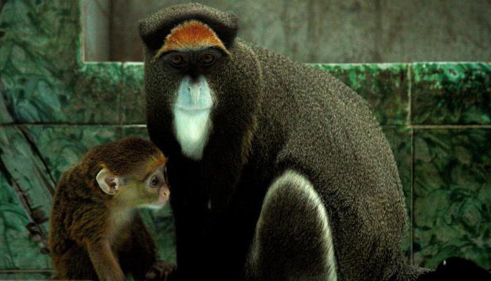 where do monkeys live