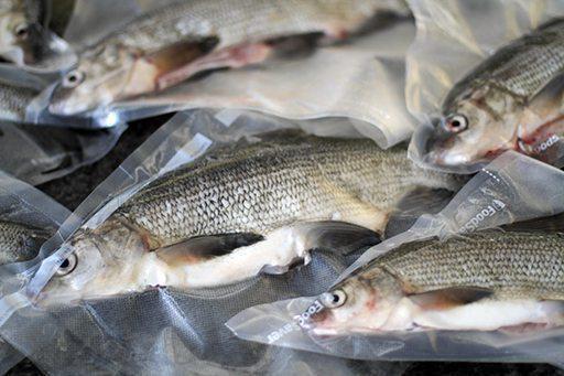 fish whitefish recipes cooking salt