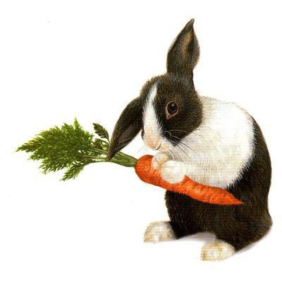 как кормить кроликов зимой на улице