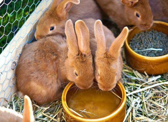 what to feed rabbits in winter at home