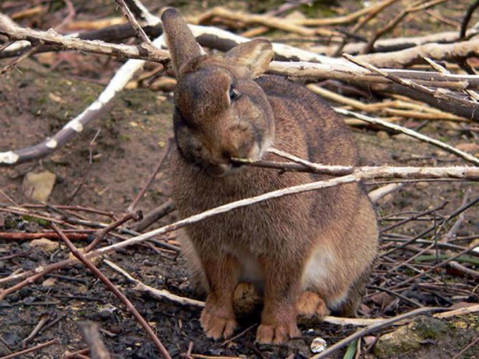 what to feed rabbits in winter in the village