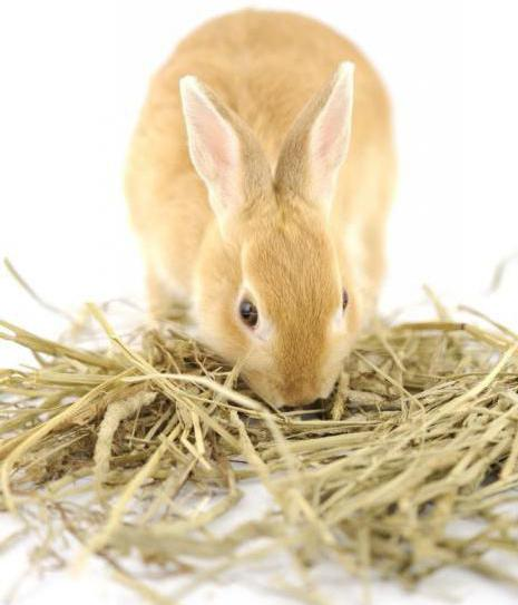 what to feed a rabbit in winter if there is no hay