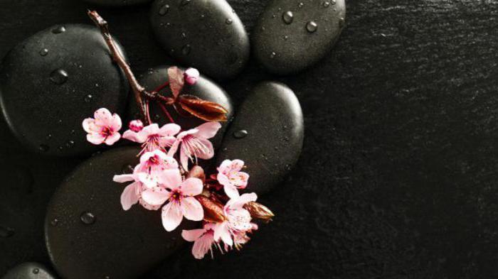 Sakura branch what is
