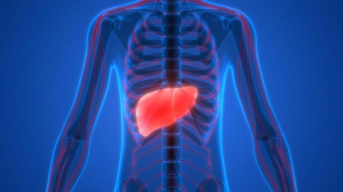 how to restore the liver at home