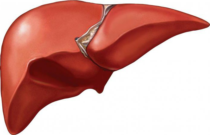 how to quickly restore the liver