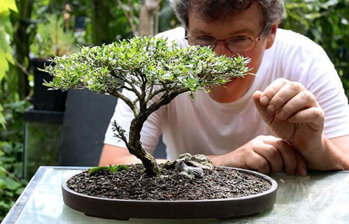bonsai how to care