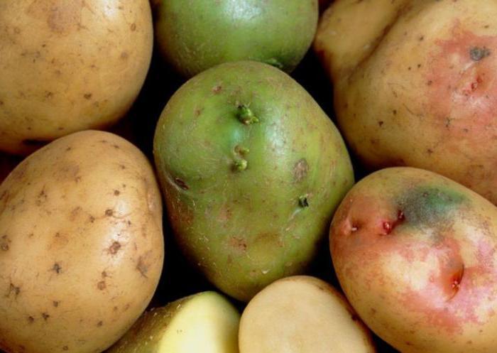 картофель полезные свойства и противопоказания