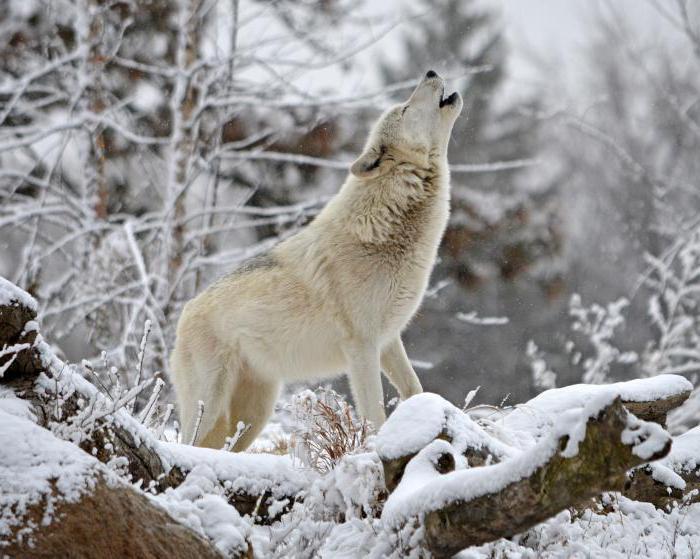 Russian winter nature description