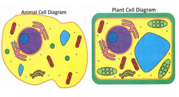 polysomes consist of