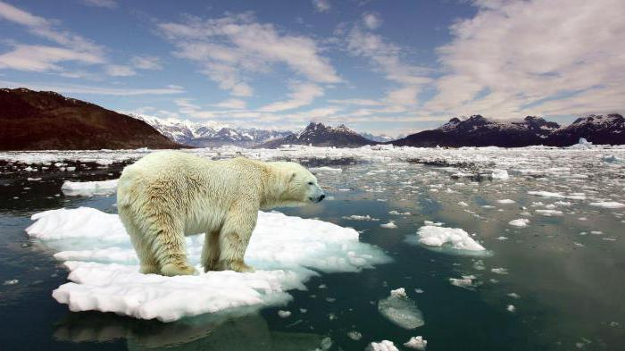 Where does the polar bear live on which mainland